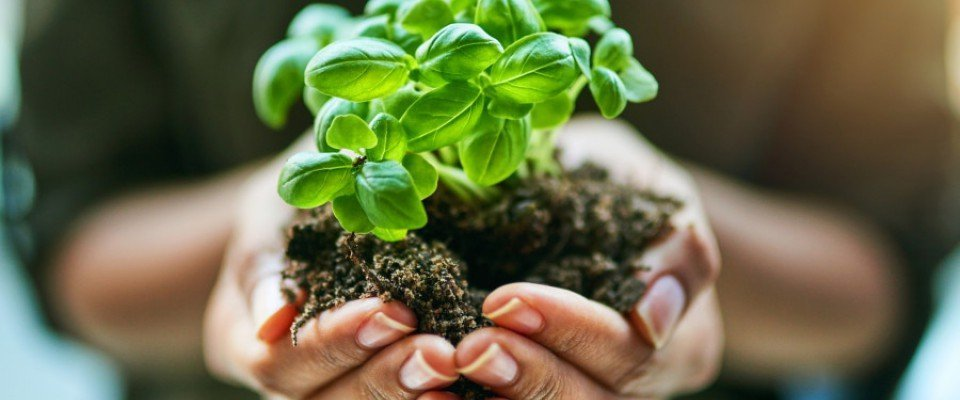Composttoiletten, de voordelen 2